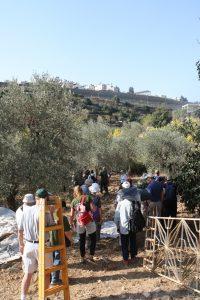 JAIdeltagare plockade under fredagen oliver utanför beit jala. I bilden syns också väg 60, en israelisk motorväg inne i Palestina.